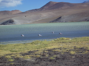 Flamingos at Santa Rosa Lake